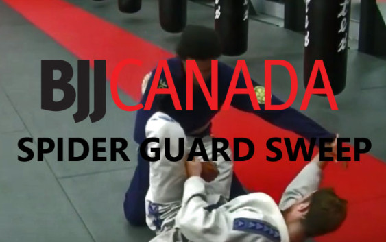 spider-guard-sweep